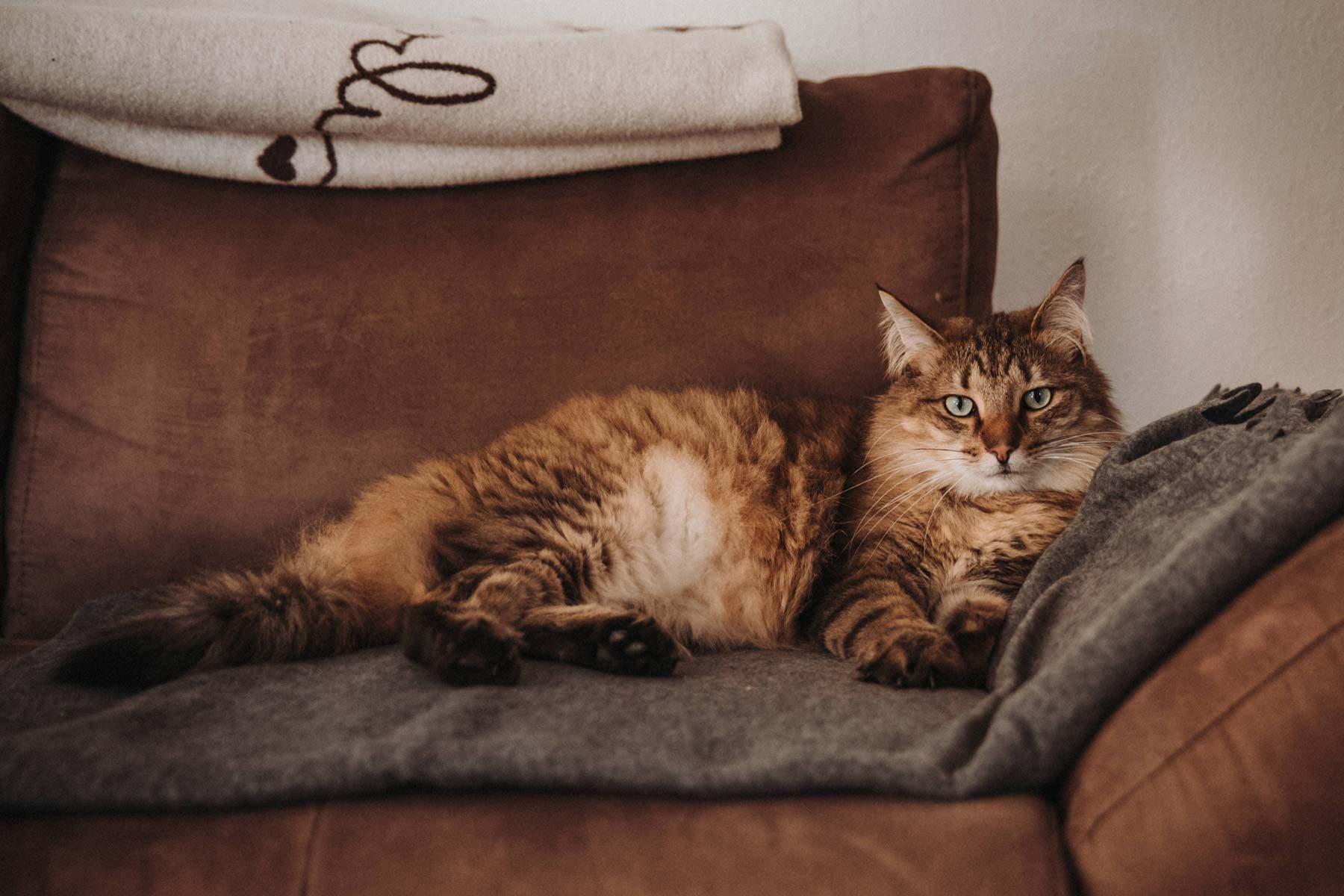 Katze auf der Couch